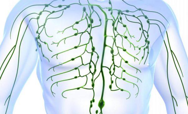 Hệ thống bạch huyết của người